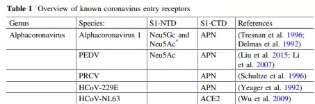 Overview of known coronavirus entry receptors