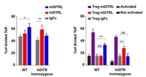 図2. 体外実験によると、hGITRは効果T細胞とTregに機能することが分かった | サイヤジェン