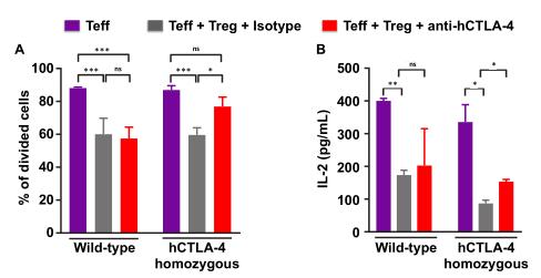 図5. hCTLA-4の機能:α-human CTLA-4のモノクローナル抗体が低減する   サイヤジェン株式会社