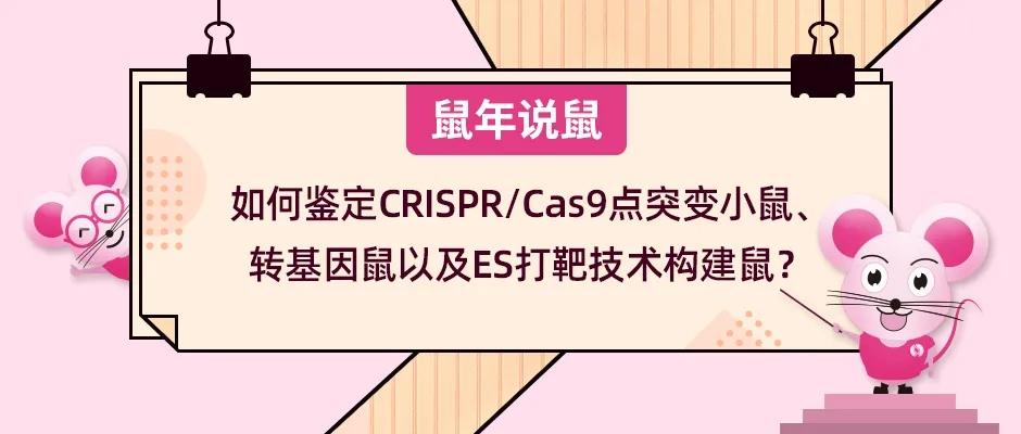 如何鉴定CRISPR/Cas9点突变小鼠、转基因鼠以及ES打靶技术构建鼠?
