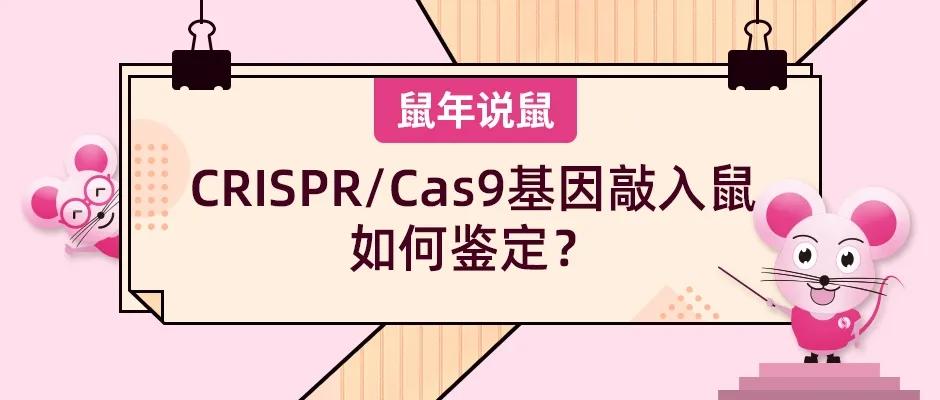《鼠年说鼠》第十六期:CRISPR/Cas9基因敲入鼠如何鉴定?