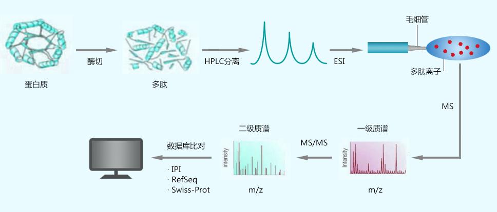 蛋白质谱分析