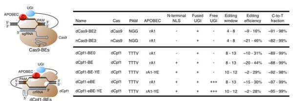 Cas9碱基编辑器与Cpf1碱基编辑器的特点比较