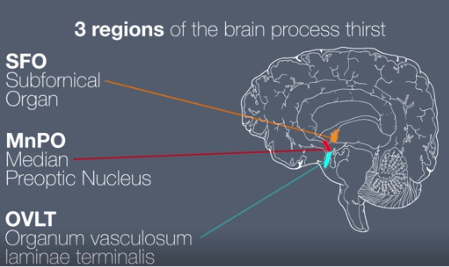 小鼠大脑区域图
