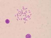 干细胞常规检测