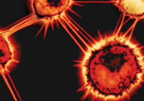 """""""朊病毒经由纳米管在小鼠细胞间传播""""/"""