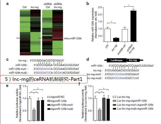 """""""Inc-mg的ceRNA机械研究-Part1""""/"""