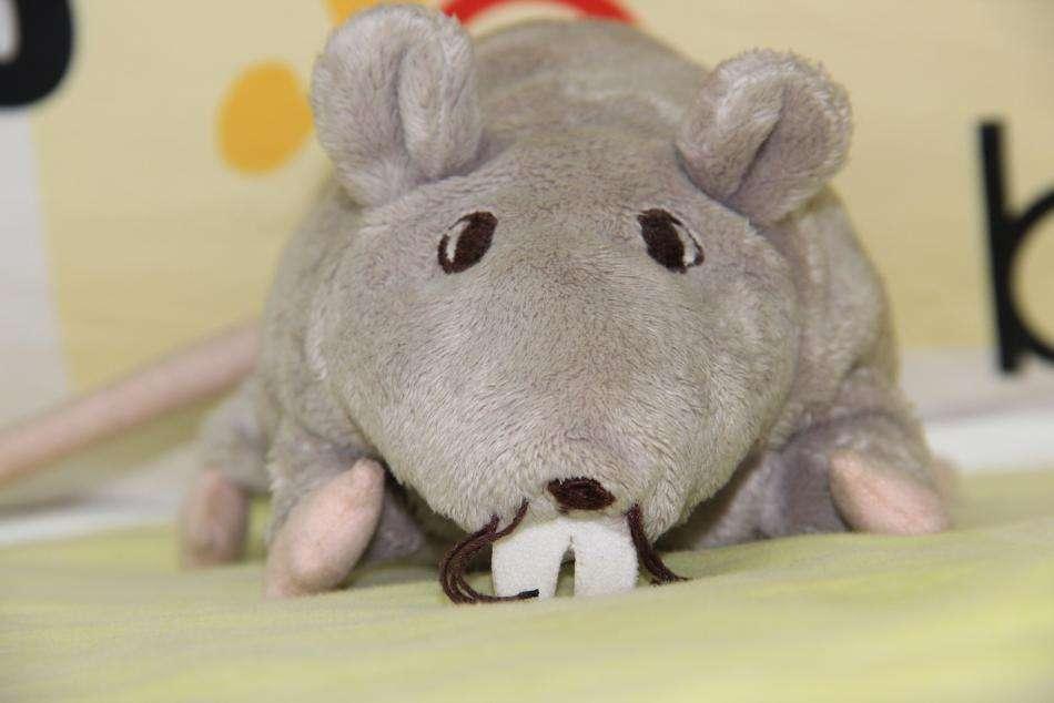 """一只脱发的小鼠"""""""" width="""