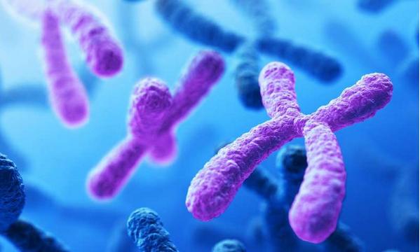 人类染色体检测