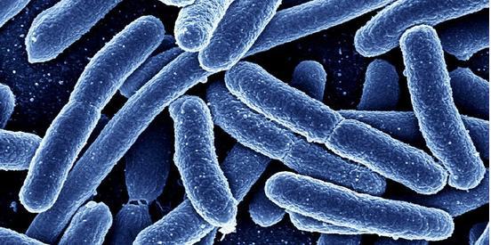 """""""CRISPR将微生物打造最小'录音机'"""""""