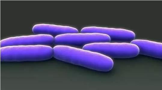 """""""肠道微生物"""""""