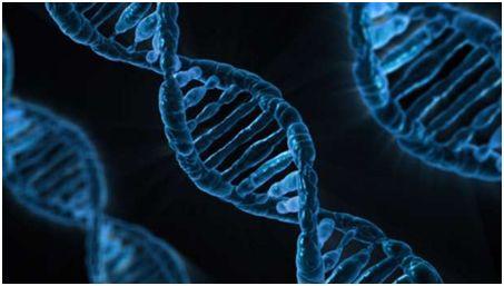 基因组编辑工具CRISPR
