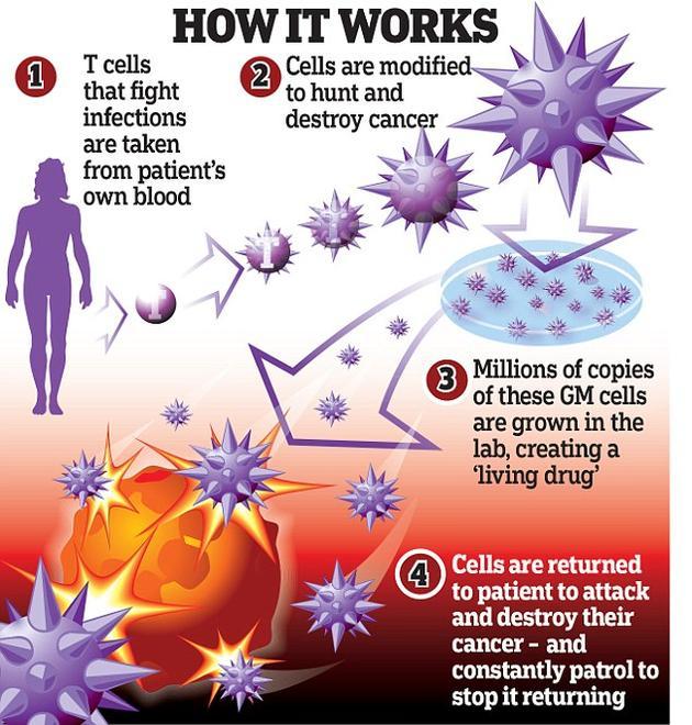 T细胞受体免疫疗法研究