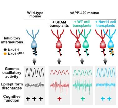 优化的神经元