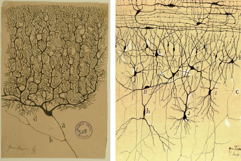 手绘脑细胞插图2