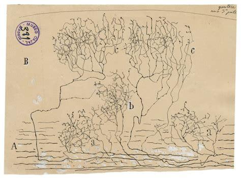 手绘脑细胞插图3