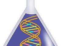 CRISPR致基因突变