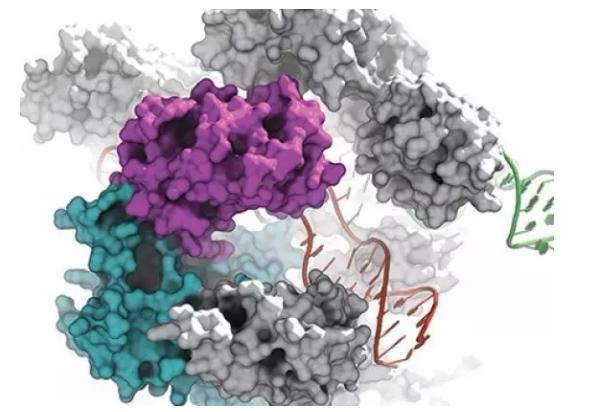 """CRISPR-Cas9基因编辑技术"""