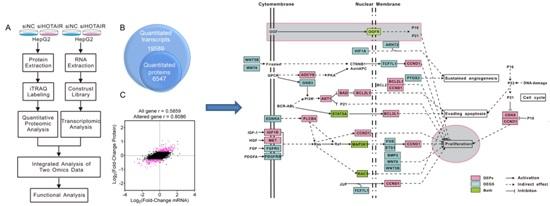 """""""转录组和定量蛋白组整合分析研究长链非编码RNA"""