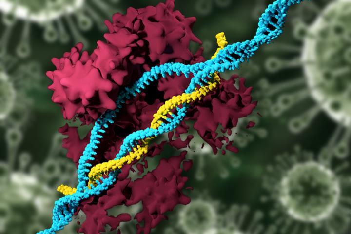 """CRISPR-Cas9基因组编辑"""