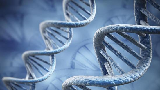 人体 CRISPR