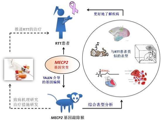 MECP2基因突变