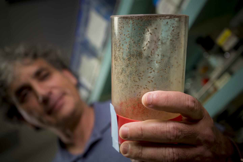 Ethan Bier教授和他的实验果蝇
