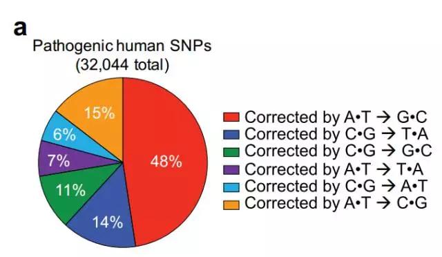 将近一半的致病变异来源于C-G组合到A-T组合的改变