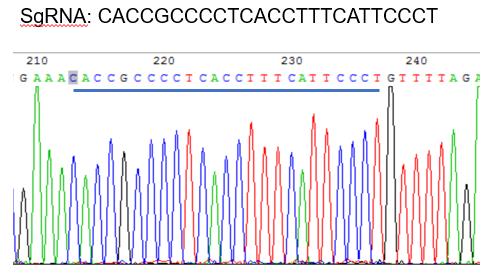 sgRNA target区域及附近序列出现套峰
