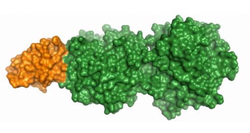 蛋白质的三维结构图