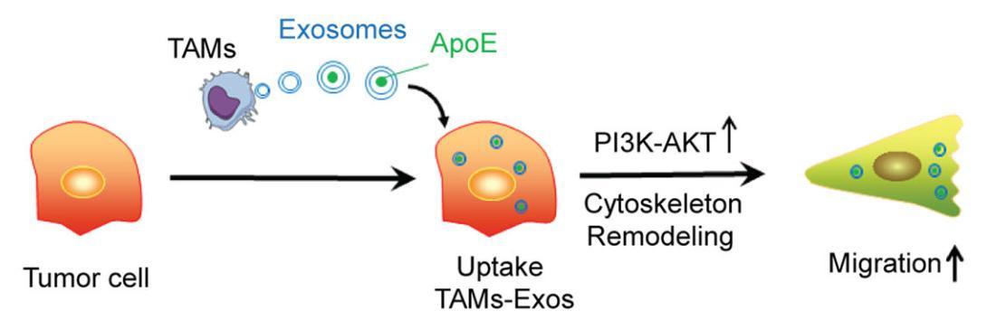 胃癌的发病机制研究新进展