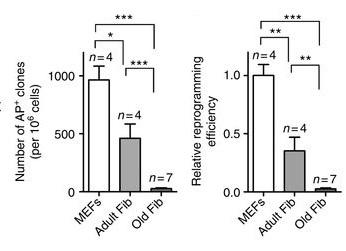 老年成纤维细胞重编程效果低下