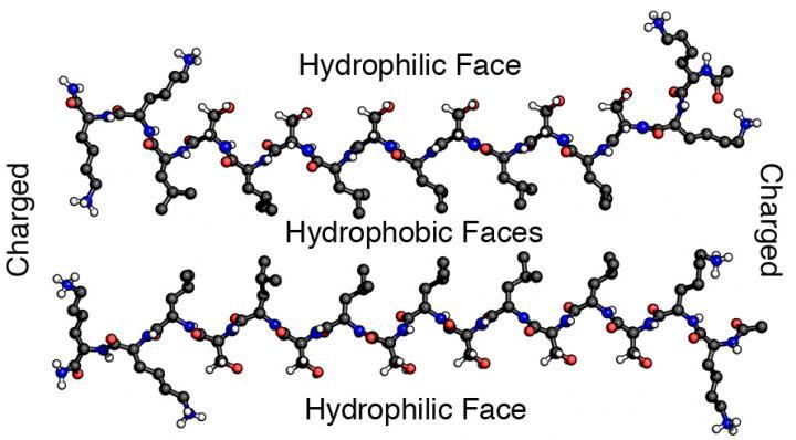 这种特殊的水凝胶生物材料由一个自组装的多肽和氨基酸序列K2(SL)6K2组成