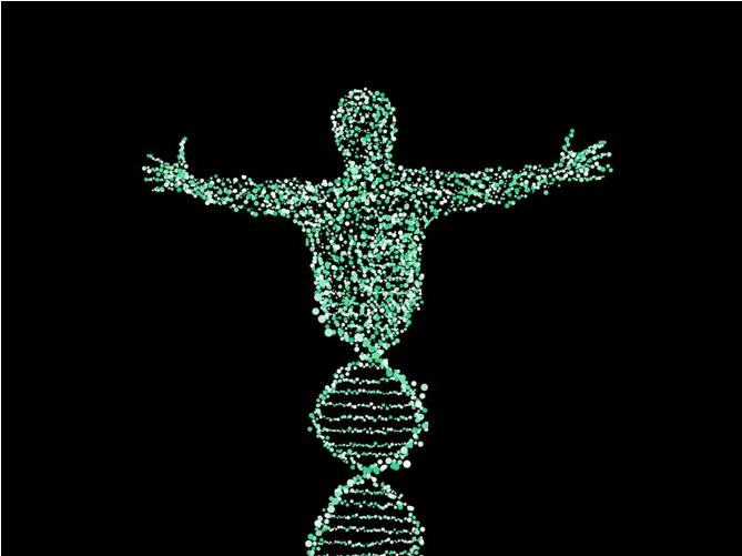 基因里藏着大量信息
