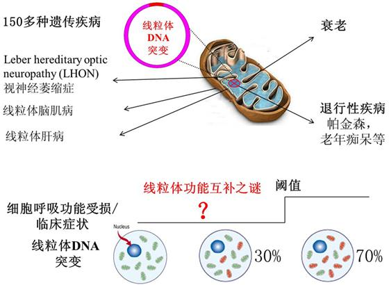 中国科学院广州生物医药与健康研究院刘兴国研究组