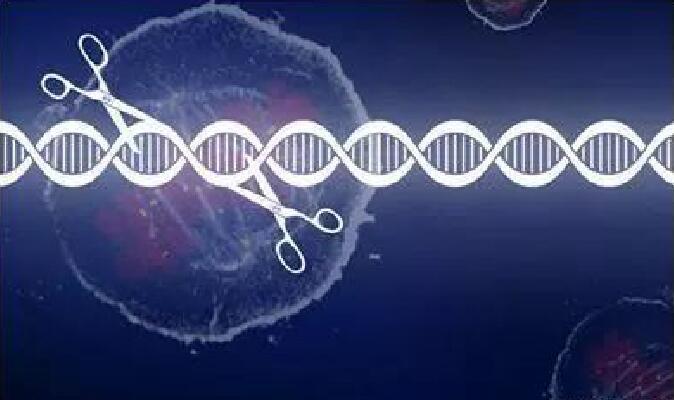 """CRISPR-Cas9结构研究"""