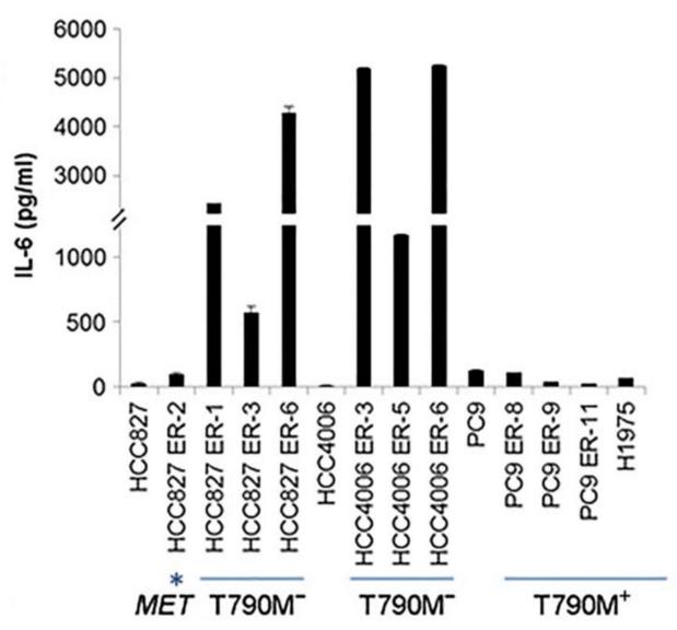 没有 T790M 突变(T790M-)的耐药细胞大量表达 IL-6