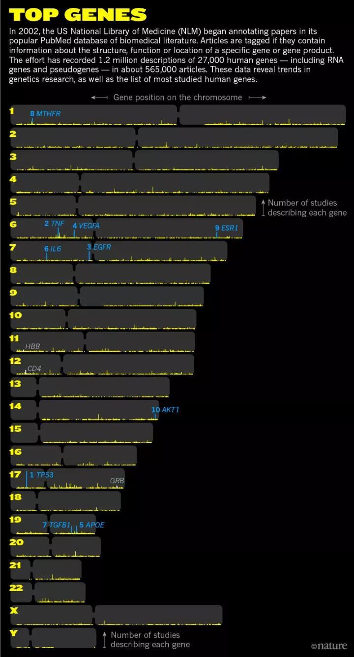 热门基因在染色体上的分布