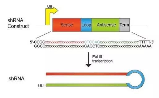 设计RNA