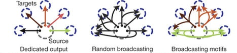 从一个信号源到多个靶区域的3种假想的信息传输模式