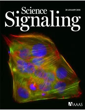 侵略性乳腺癌的新生物标记物