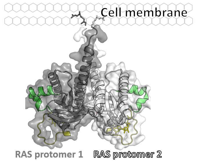 RAS基因突变研究