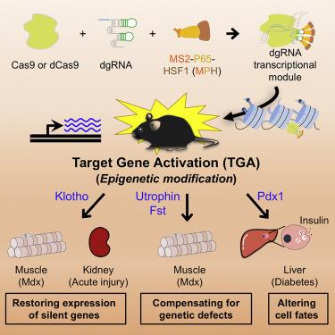 CRISPR-Cas9 激活任何基因或基因通路