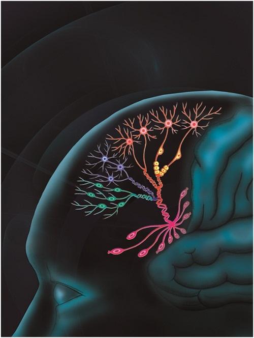 Monocle分析解释人前额叶皮层发育的细胞谱系图