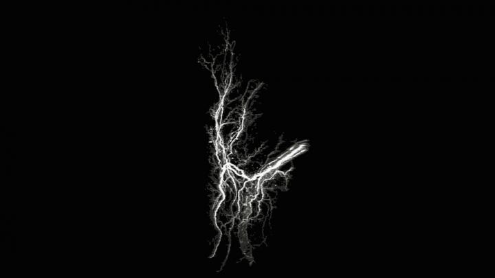 脂肪组织里的神经
