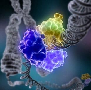 CRISPR基因编辑
