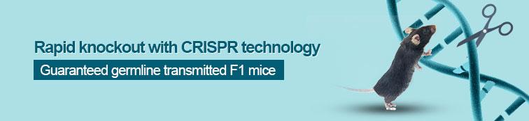 crispr cas9 knockout mice