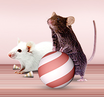 CRISPR/Cas9 Genome Editing Mice,  Up to 40% off
