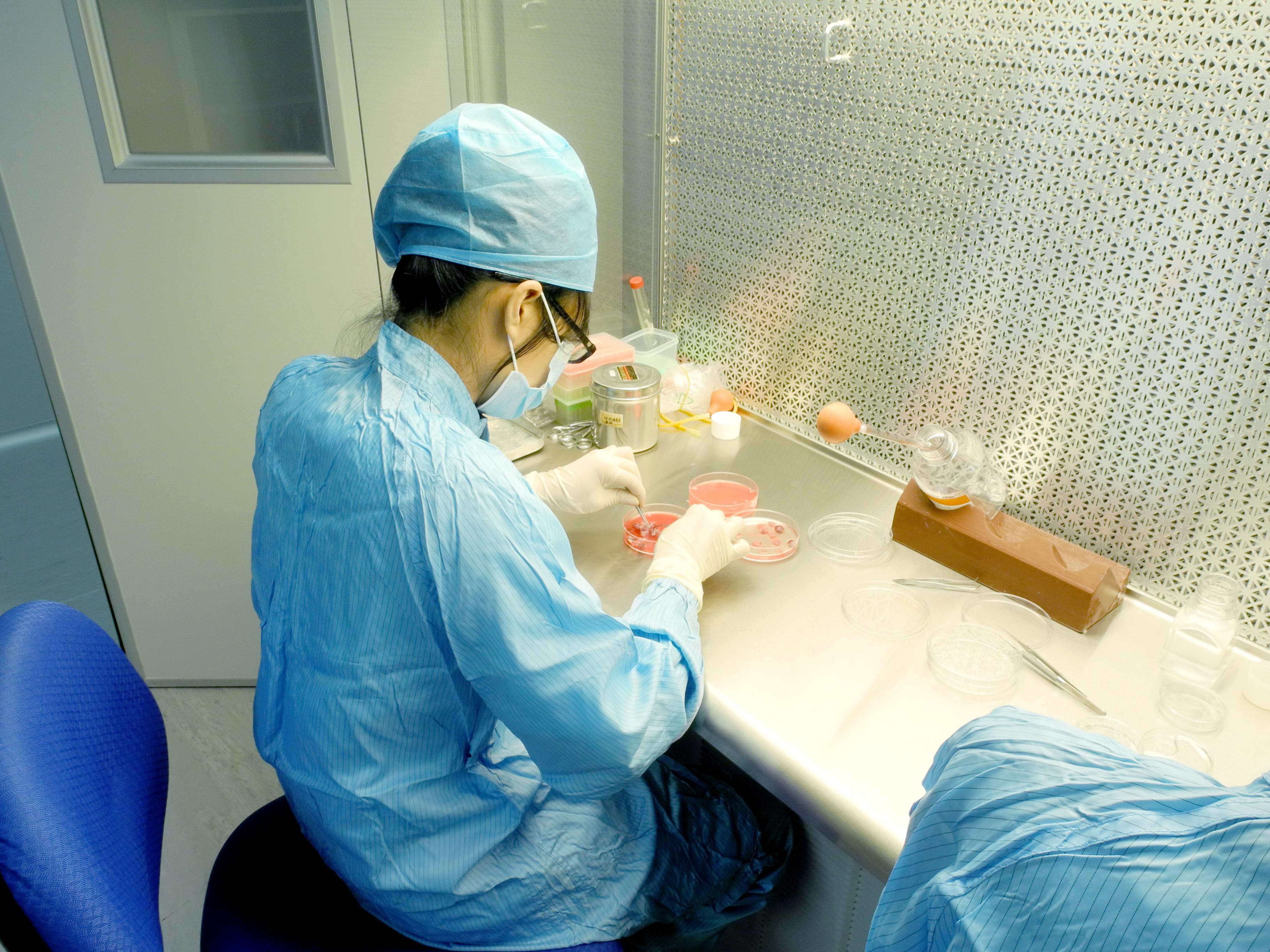 干细胞研发实验图4
