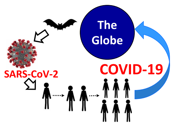 The Spread of the SARS-CoV-2: from bats to human